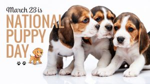 National Puppy Day 2020 – Ways to Celebrate and Unconditional Love of Your Puppies