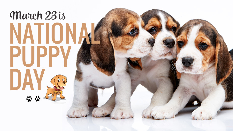 National Puppy Day 2019