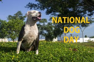 National Dog Day 2020 -The Day to Make Your Dog Feel Extra Special