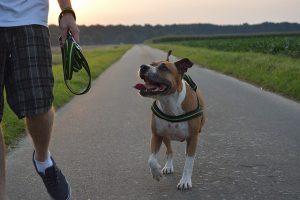 How Often Should I Walk My Dog?